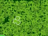Four-leaf clover-fun games